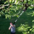 Tree Pruner Bypass Telescopic UP86